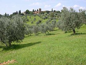 Extra-virgin olive oil of Colline Salernitane
